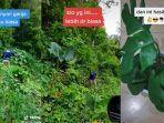 viral-video-anggota-bnn-cari-tanaman-hias-di-hutan-untuk-dibawa-pulang-berikut-cerita-lengkapnya.jpg