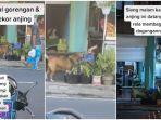 Viral Video Anjing Minta Jatah Makan ke Ibu Penjual Gorengan Setiap Hari, Ini Kisah Lengkapnya