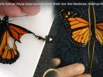 wanita-operasi-sayap-kupu-kupu-berbekal-nalar-dan-alat-seadanya_20180114_013428.jpg