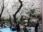 Pengunjung Taman Ueno Tokyo Jepang Dilarang ber-hanami Sambil Duduk di Bawah Pohon Sakura