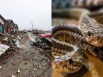 warga-pandeglang-diresahkan-dengan-keberadaan-ular-yang-sarangnya-terusik-pasca-tsunami-banten.jpg