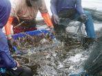 XL Axiata Kembangkan Solusi IoT dan Machine Learning untuk Perbaiki Kualitas Budidaya Ikan dan Udang