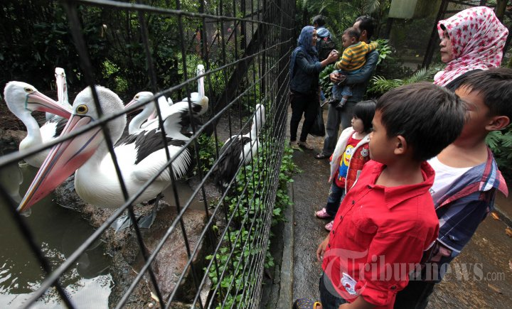 Jalan Menuju Kebun Binatang Bandung