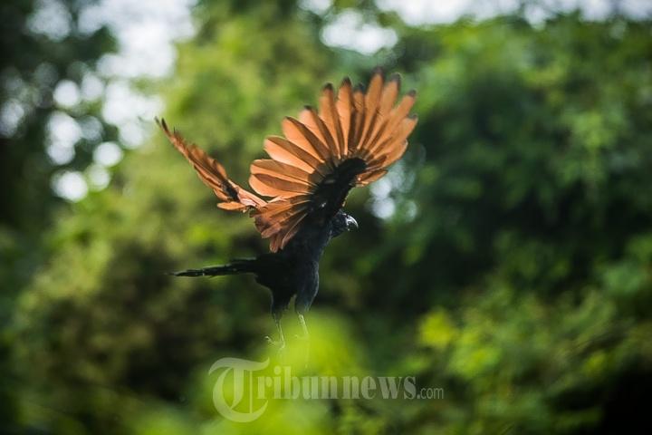 Burung Bubut Kawasan Leupung Aceh Besar Foto 3 1678293 Tribunnews Com Mobile