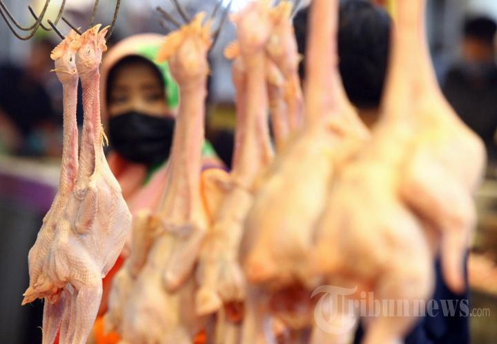 Dampak Ekonomi Pandemi Covid-19 Bagi Pedagang Ayam Potong