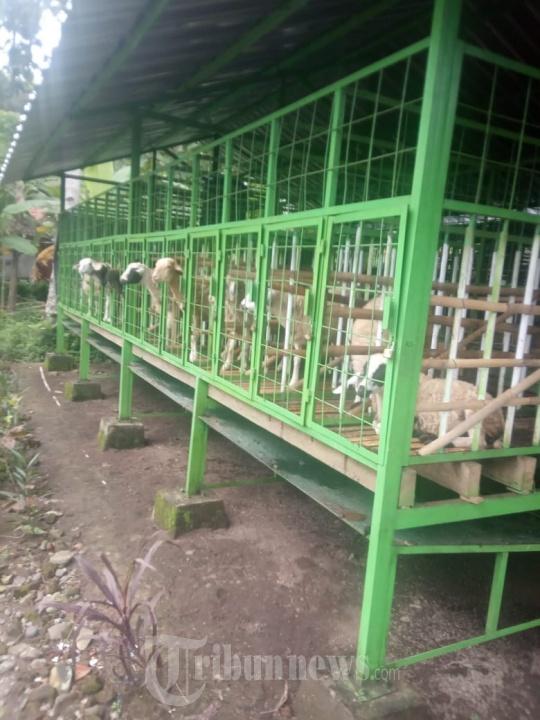 MoU Program UMKM Ngingu Domba