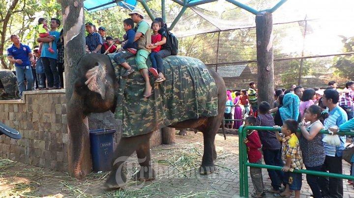 Naik Gajah di Wisata Ragunan