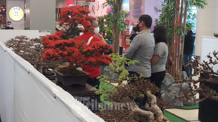 Pameran Bonsai dan Suiseki Tangerang