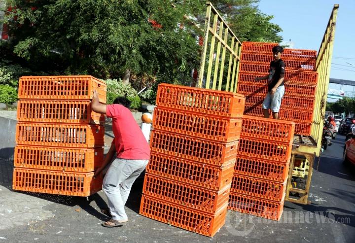 Pembagian Ayam Gratis di Pasar Bulu Semarang Semrawut