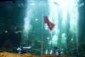 aaliyah-massaid-gladi-resik-pengibaran-bendera-di-dalam-air_20190812_222956.jpg