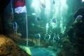 aaliyah-massaid-gladi-resik-pengibaran-bendera-di-dalam-air_20190812_223018.jpg