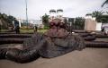 aksi-monster-oligarki-dari-aktivis-greenpeace_20211005_135719.jpg
