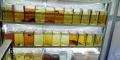 budidaya-ikan-cupang-melonjak-di-tengah-pandemi-covid-19_20200925_192853.jpg