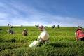 crowde-beberkan-3-hal-terkait-produk-pertanian_20201202_103521.jpg