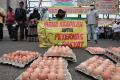 demo-peternak-ayam-di-depan-gedung-dpr-ri_20211011_155451.jpg