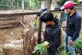donasi-sayuran-sawi-7-ton-untuk-satwa-kebun-binatang-bandung_20210805_200941.jpg