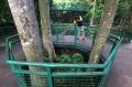 forest-walk-hutan-kota-babakan-siliwangi-akan-kembali-dibuka_20200708_182807.jpg