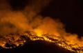Gelombang Panas Membakar Sebagian Besar Hutan Asli Turkey