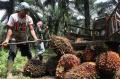 harga-tbs-kelapa-sawit-naik_20210917_200714.jpg
