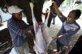 KNPI Berbagi Daging Kurban