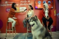 kolaborasi-royal-canin-dan-mars-pet-care-dengan-shopee_20191108_234956.jpg