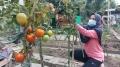 Komunitas Wanita Tani Anthurium Bangkit Pasca Banjir