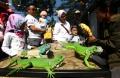 kumpul-bareng-komunitas-pencinta-iguana-bandung_20191020_224935.jpg