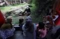 Melihat Lebih Dekat Panda di Taman Safari Saat Pandemi