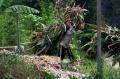 mencari-batang-pohon-jagung-untuk-pakan-ternak-sapi_20200807_234742.jpg