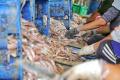panen-ikan-munir-di-pelelangan-ikan-tpi-tasikagung-rembang_20210922_164129.jpg
