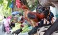 Pedagang Ayam Kampung Laris Manis Jelang Iedul Fitri 1442 H