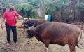 pedagang-hewan-kurban-laris-manis_20210606_201549.jpg