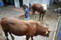 pemeriksaan-hewan-kurban-jelang-idul-adha_20210715_203810.jpg