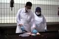 Pemotongan Hewan Kurban di RPH PD Dharma Jaya Cakung