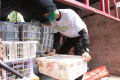 Penangkapan Penyelundupan Ribuan Burung Ilegal Lampung