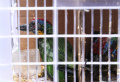 penangkapan-penyelundupan-ribuan-burung-ilegal-lampung_20210623_130316.jpg