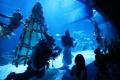 pertunjukan-bawah-air-pada-libur-natal_20201225_180932.jpg