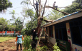 Pohon Tumbang Timpa Atap Sekolah Alam Matoa Depok