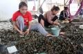 potret-nelayan-pengupas-kerang_20200714_231456.jpg