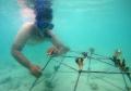 program-save-ocean-and-small-islands-di-pulau-harapan_20210524_000843.jpg