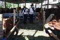 spg-cantik-layani-pembeli-hewan-kurban-di-kandang-sapi-widistia_20200724_110225.jpg
