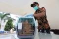 vaksin-rabies-massal-di-jakarta_20190321_204736.jpg