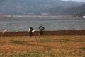 Warga Mencari Ikan di Bendungan Jatigede Sumedang
