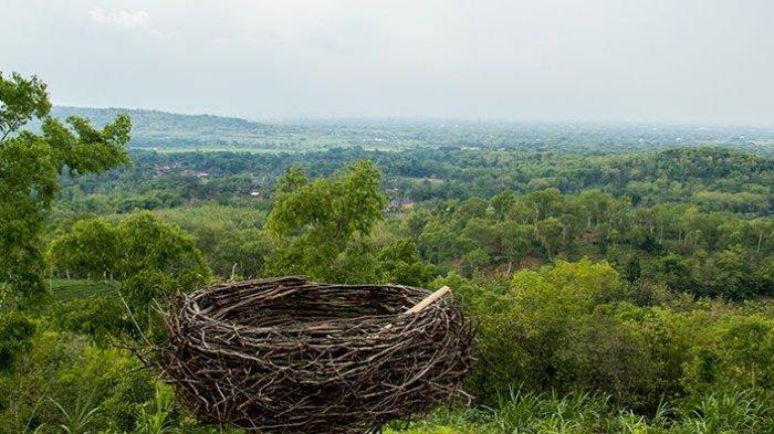 Sarang burung merupakan spot foto di objek wisata Bukit Cinta Klaten