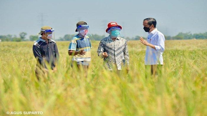 Jokowi-Kunjungi-Petani-di-Indramayu-Jawa-Barat.jpg
