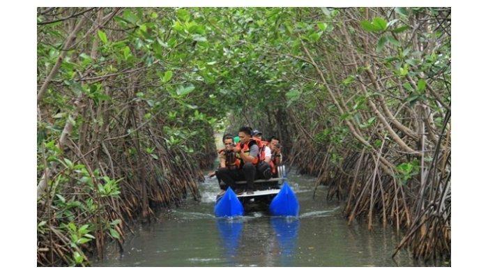 Petugas sedang menyusuri pepohonan yang berada di area taman Mangrove.