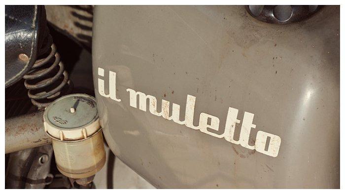 Ducati Muletto