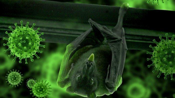 foto-hanya-ilustrasi-virus-nipah-dari-china-disebarkan-oleh-kelelawar-buah.jpg