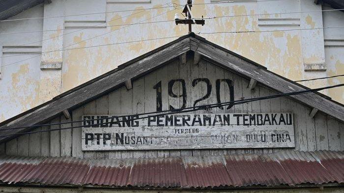 Gudang pemeraman tembakau persero PTPN Nusantara IX Bulu Cina