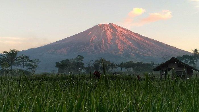 Gunung Semeru Tribunnewswiki Com Mobile